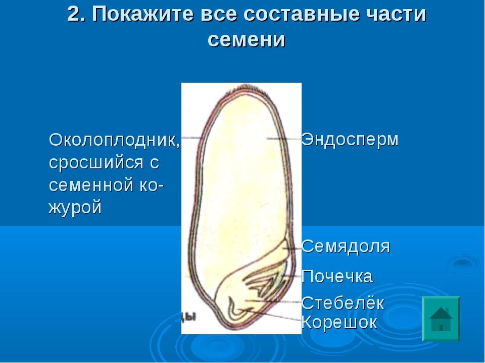 2. Покажите все составные части семени Околоплодник, сросшийся с семенной ко-...