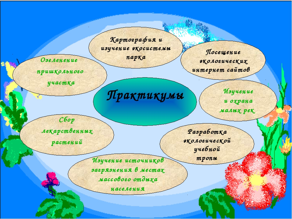 Озеленение пришкольного участка Практикумы Сбор лекарственных растений Разраб...