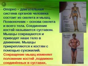 Опорно – двигательная система органов человека состоит из скелета и мышц. По