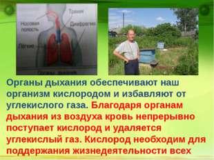 Органы дыхания обеспечивают наш организм кислородом и избавляют от углекисло