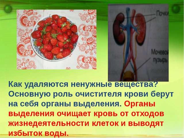 Как удаляются ненужные вещества? Основную роль очистителя крови берут на себ...