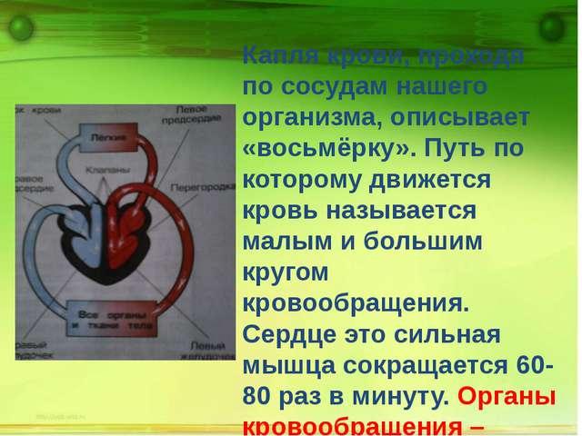 Капля крови, проходя по сосудам нашего организма, описывает «восьмёрку». Пут...
