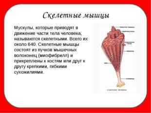 Скелетные мышцы Мускулы, которые приводят в движение части тела человека, на
