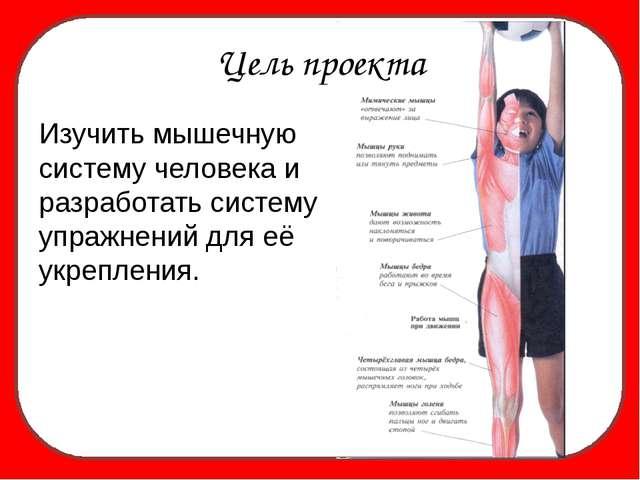 Изучить мышечную систему человека и разработать систему упражнений для её ук...