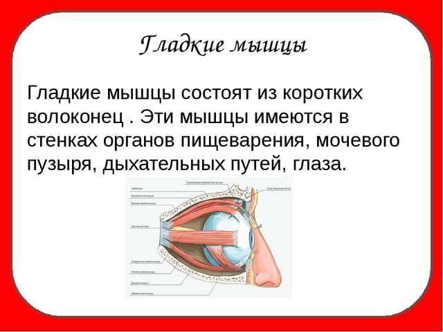 Гладкие мышцы Гладкие мышцы состоят из коротких волоконец . Эти мышцы имеютс...