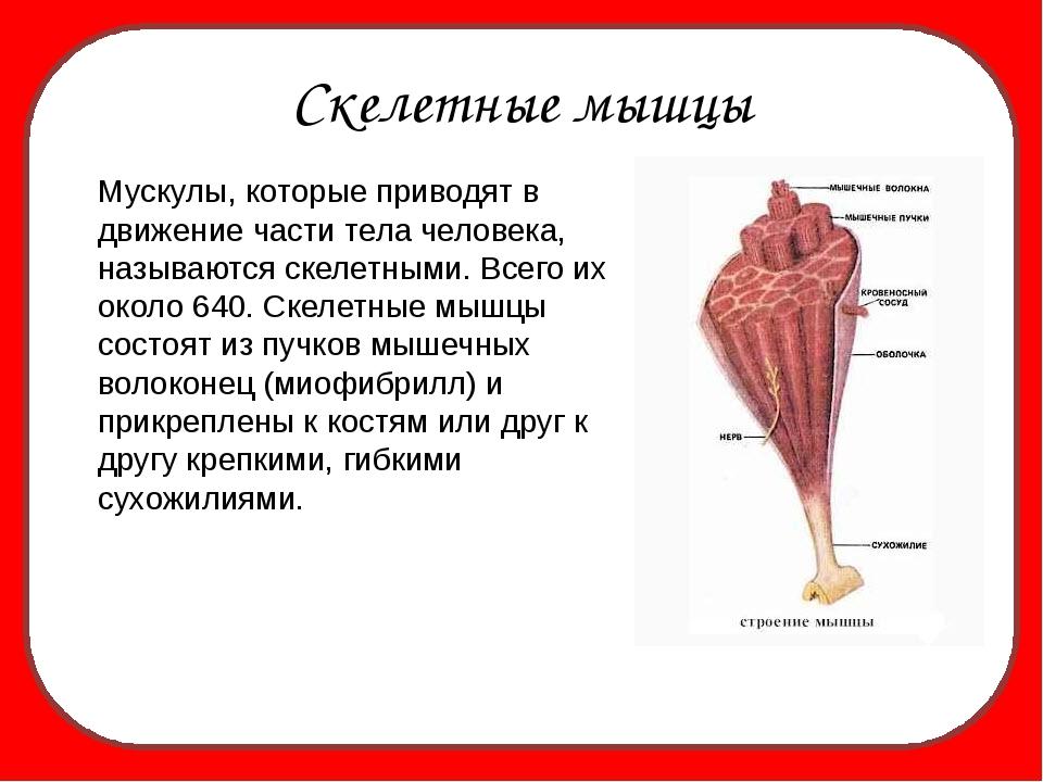 роль скелетные мышцы выполняют функции септик своими руками