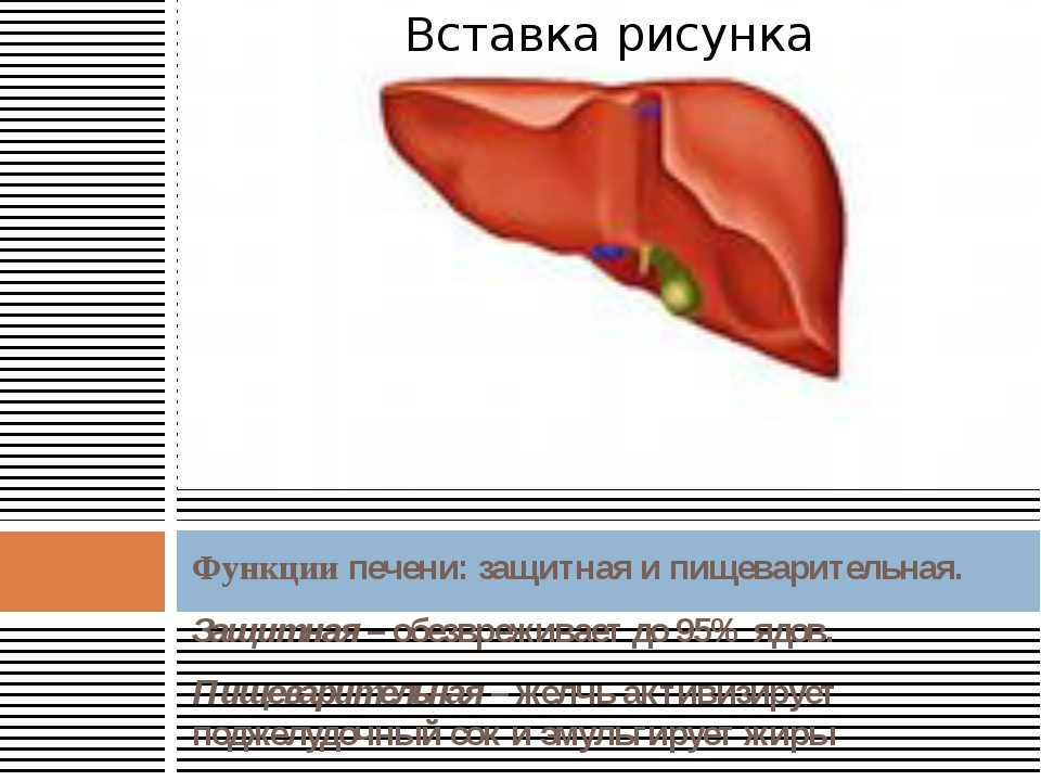 Функции печени: защитная и пищеварительная. Защитная – обезвреживает до 95% я...