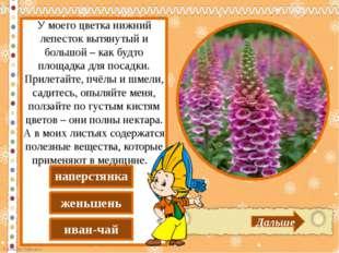 иван-чай женьшень наперстянка Дальше У моего цветка нижний лепесток вытянуты