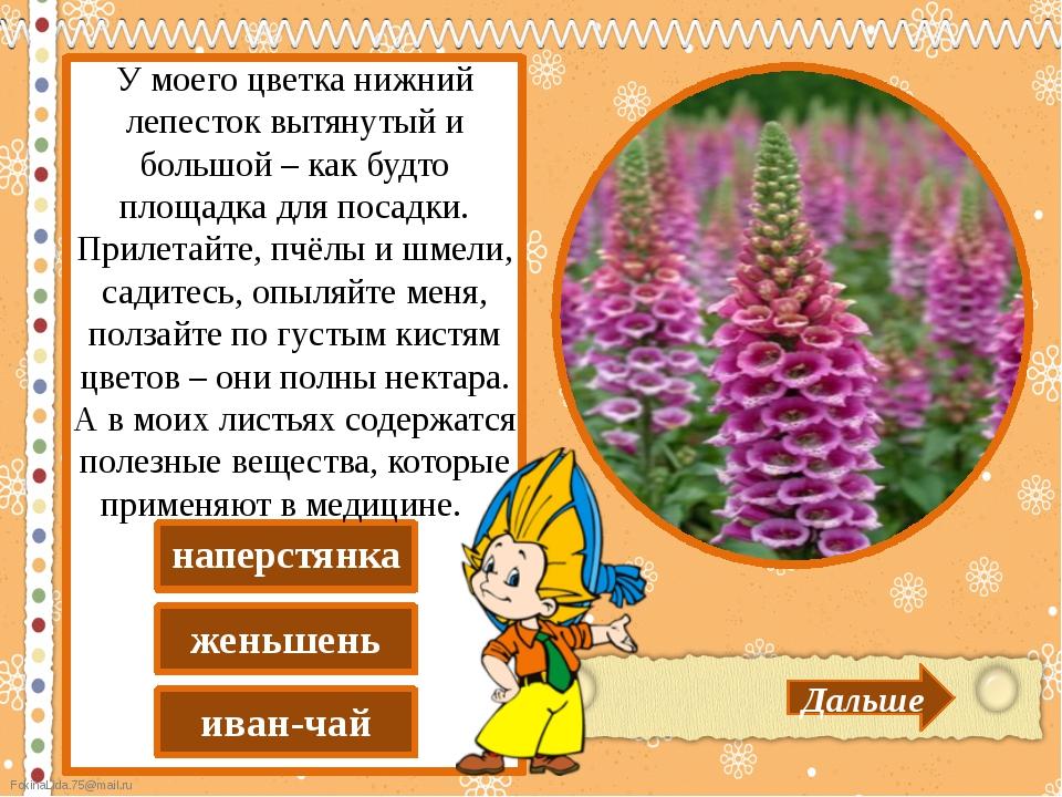иван-чай женьшень наперстянка Дальше У моего цветка нижний лепесток вытянуты...