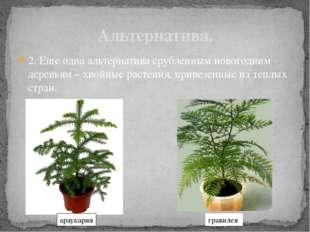 2. Еще одна альтернатива срубленным новогодним деревьям – хвойные растения, п