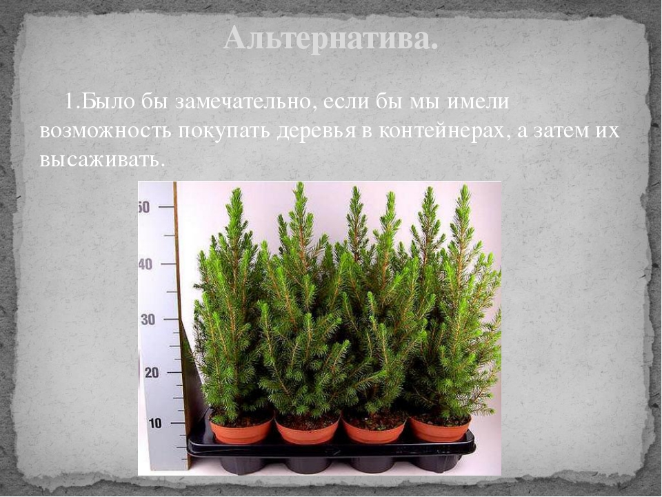 1.Было бы замечательно, если бы мы имели возможность покупать деревья в конт...