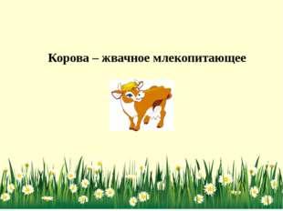 Корова – жвачное млекопитающее