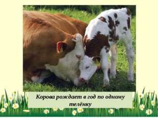 Корова рождает в год по одному телёнку
