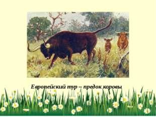 Европейский тур – предок коровы