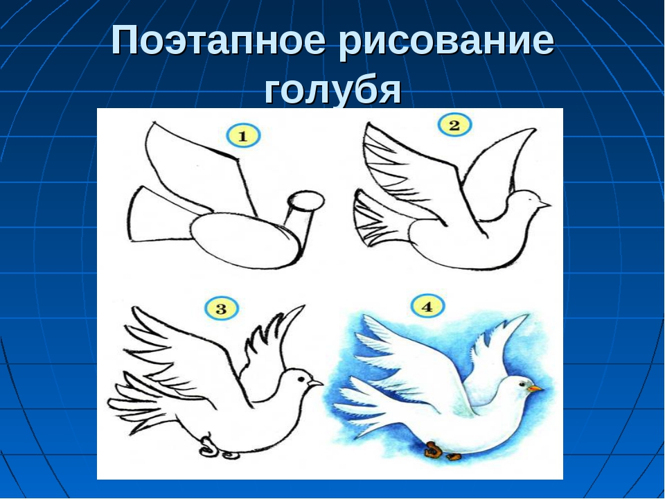 Поэтапное рисование голубя