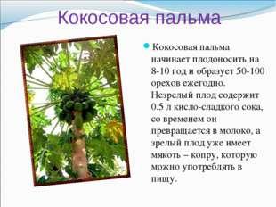 Кокосовая пальма Кокосовая пальма начинает плодоносить на 8-10 год и образует