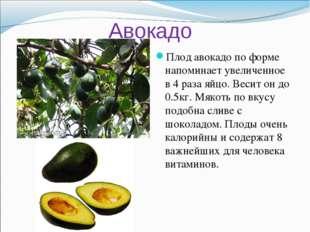 Авокадо Плод авокадо по форме напоминает увеличенное в 4 раза яйцо. Весит он