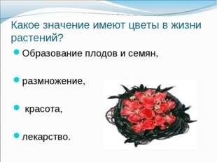 Какое значение имеют цветы в жизни растений? Образование плодов и семян, разм