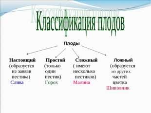 Плоды Настоящий Простой Сложный Ложный (образуется (только ( имеют (образует