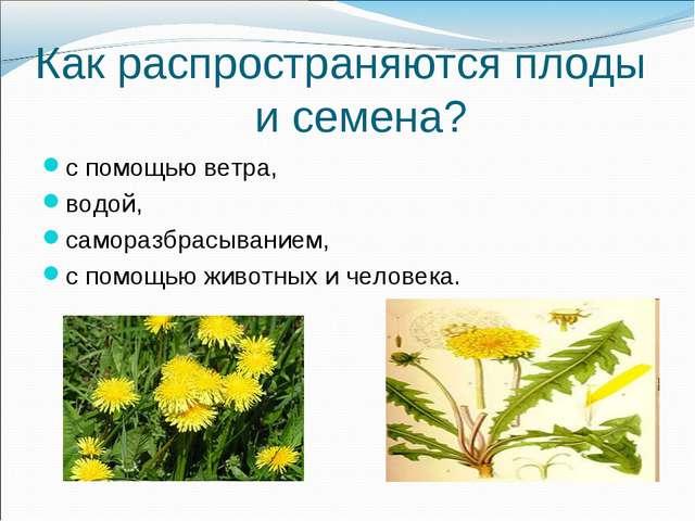 Как распространяются плоды и семена? с помощью ветра, водой, саморазбрасывани...