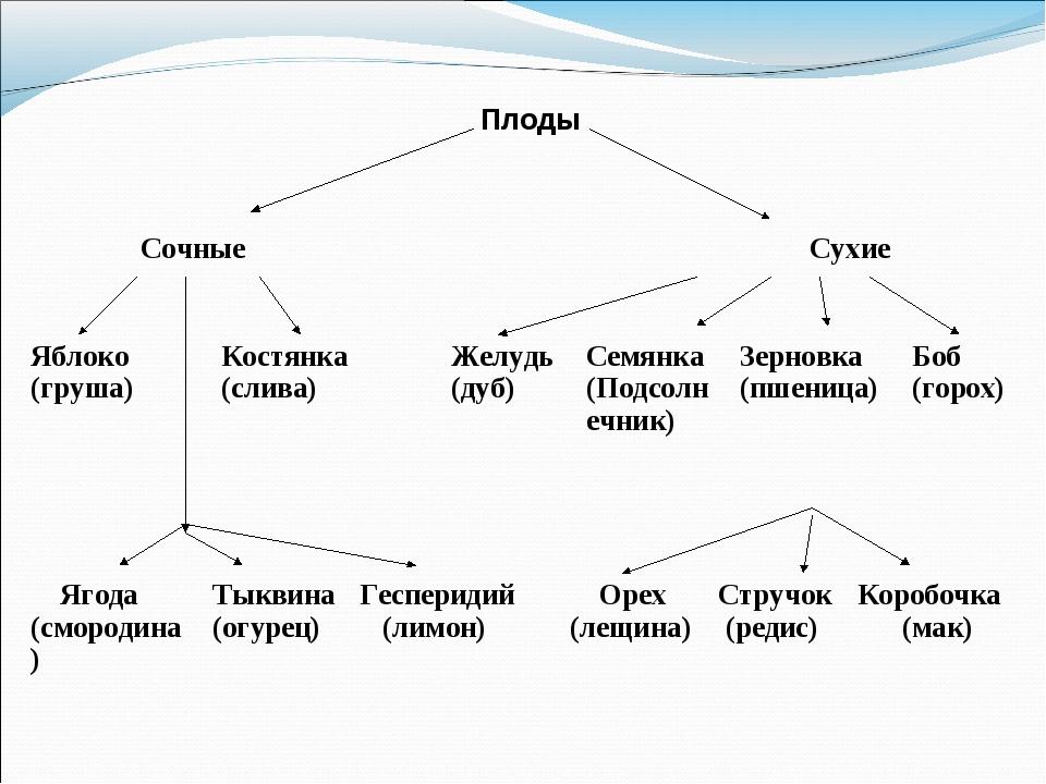 Плоды Сочные Сухие Ягода (смородина)Тыквина (огурец)Гесперидий (лимон)...