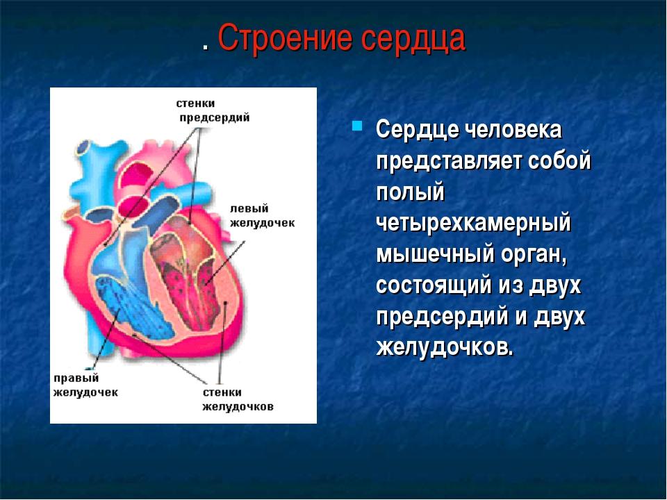 . Строение сердца Сердце человека представляет собой полый четырехкамерный мы...