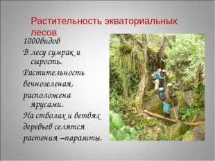 1000видов В лесу сумрак и сырость. Растительность вечнозеленая, расположена я