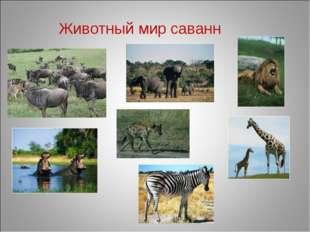 Животный мир саванн