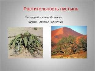 Растительность пустынь Растения имеют длинные корни, листья-колючки