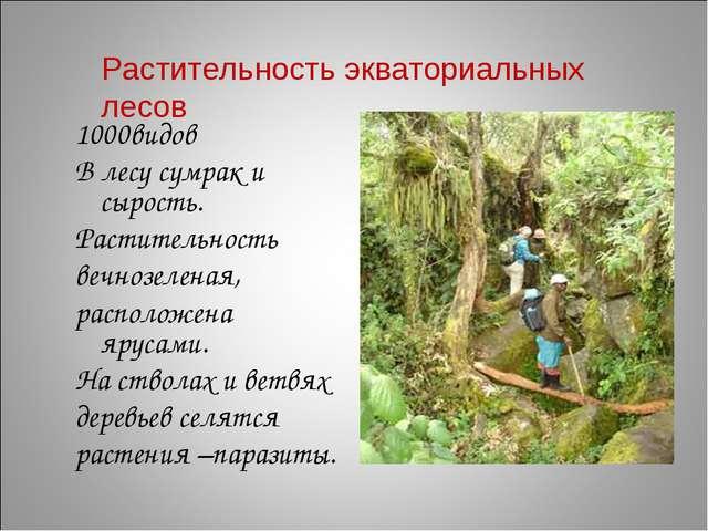 1000видов В лесу сумрак и сырость. Растительность вечнозеленая, расположена я...