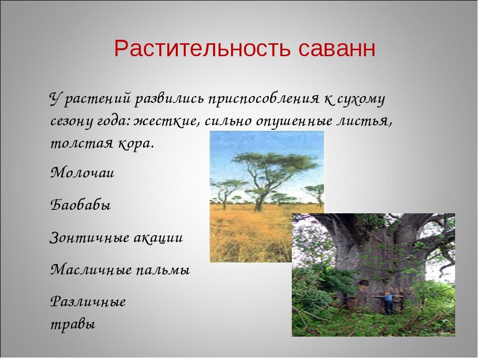 Растительность саванн У растений развились приспособления к сухому сезону год...
