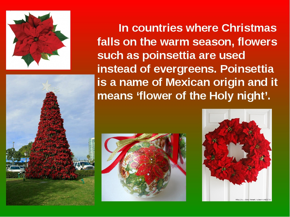 In countries where Christmas falls on the warm season, flowers such as poins...