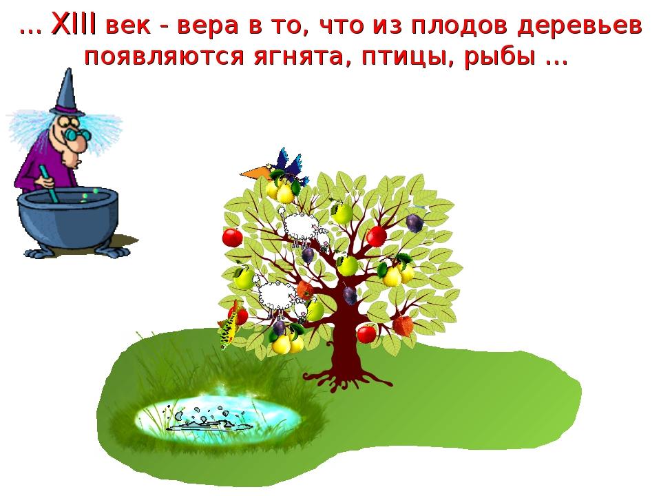 … XIII век - вера в то, что из плодов деревьев появляются ягнята, птицы, рыбы …