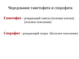 Гаметофит – рождающий гаметы (половые клетки) (половое поколение) Спорофит –
