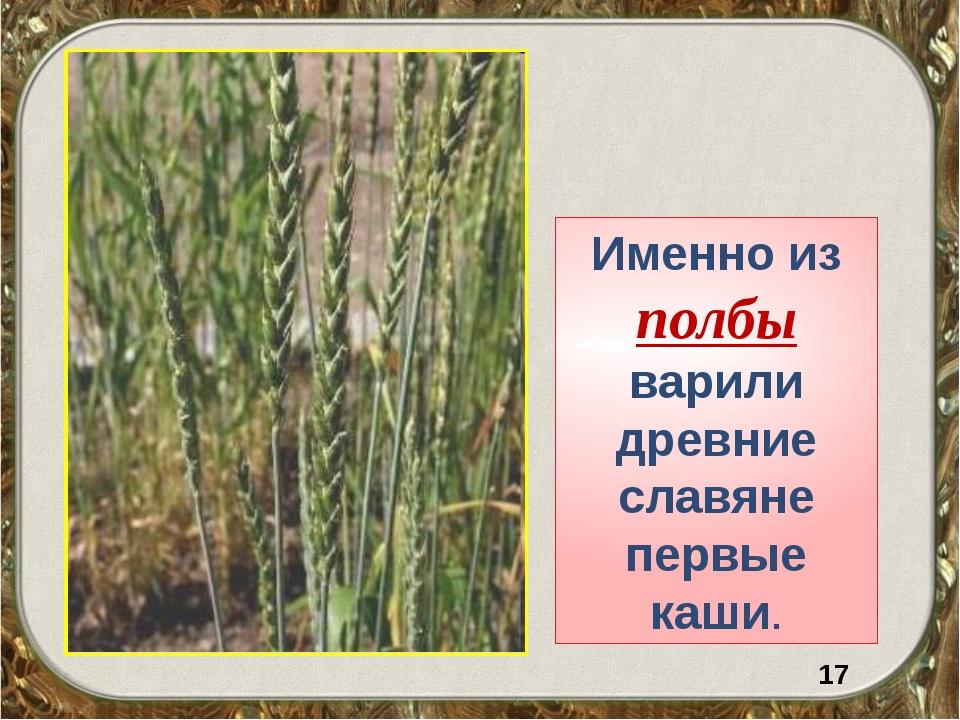 Именно из полбы варили древние славяне первые каши. 17
