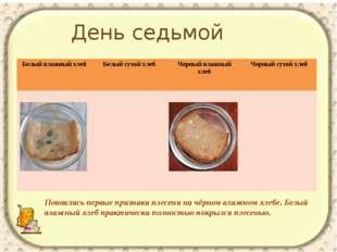 Появились первые признаки плесени на чёрном влажном хлебе. Белый влажный хлеб