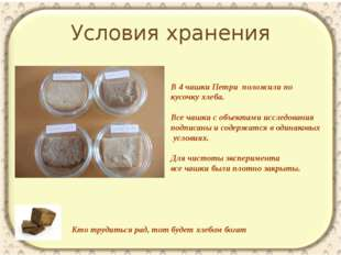 Условия хранения Кто трудиться рад, тот будет хлебом богат В 4 чашки Петри по