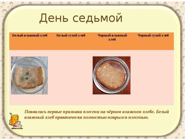 Появились первые признаки плесени на чёрном влажном хлебе. Белый влажный хлеб...
