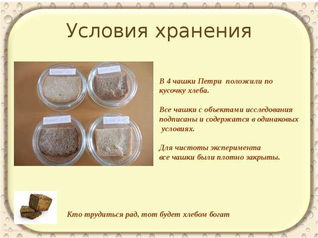 Условия хранения Кто трудиться рад, тот будет хлебом богат В 4 чашки Петри по...