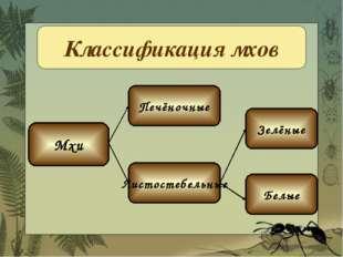 Классификация мхов Мхи Печёночные Листостебельные Зелёные Белые