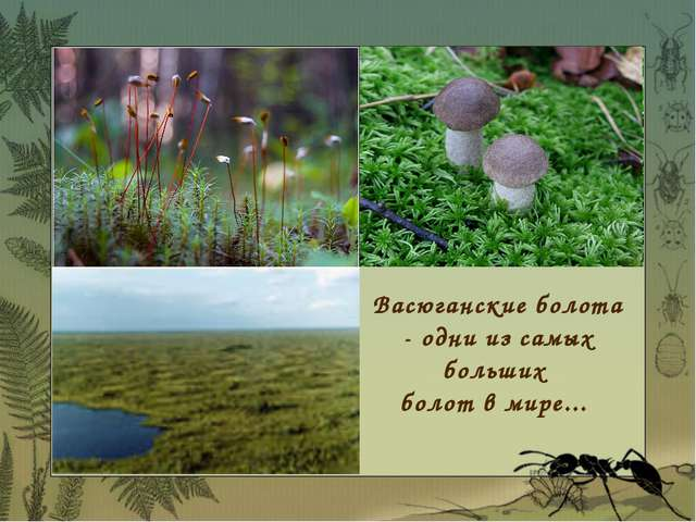 Васюганские болота - одни из самых больших болот в мире...