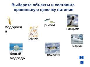 Водоросли рачки рыбы гагарки белый медведь Выберите объекты и составьте прави