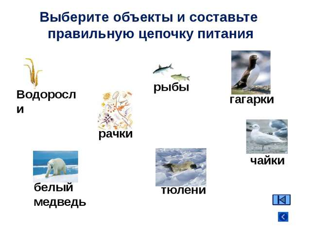Водоросли рачки рыбы гагарки белый медведь Выберите объекты и составьте прави...