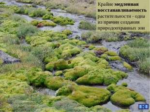 Крайне медленная восстанавливаемость растительности - одна из причин создания