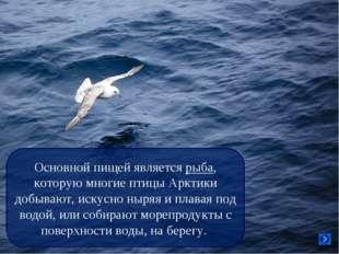 Основной пищей является рыба, которую многие птицы Арктики добывают, искусно