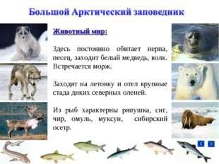 Животный мир: Здесь постоянно обитает нерпа, песец, заходит белый медведь, во