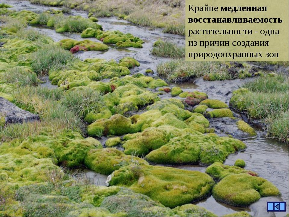 Крайне медленная восстанавливаемость растительности - одна из причин создания...