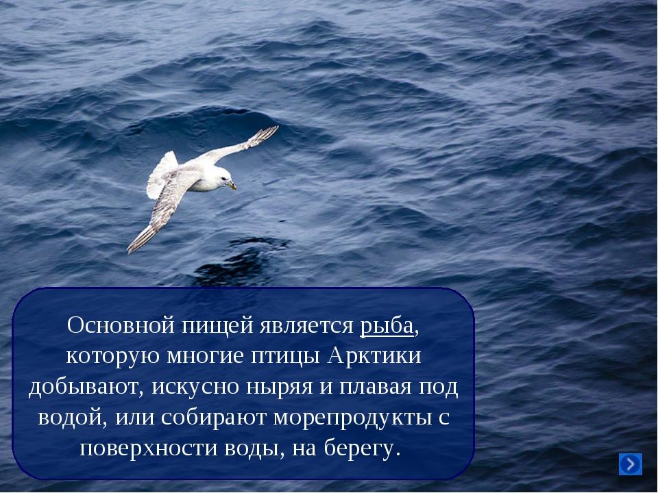 Основной пищей является рыба, которую многие птицы Арктики добывают, искусно...
