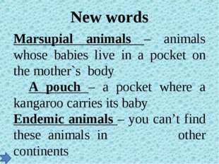 New words Marsupial animals – animals whose babies live in a pocket on the mo
