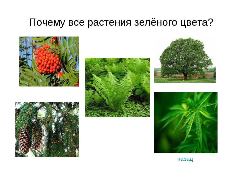 Почему все растения зелёного цвета? назад